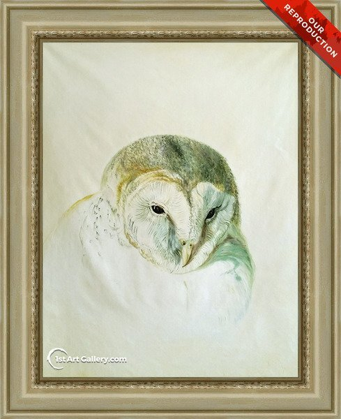 White Barn Owl, from The Farnley Book of Birds Painting - Oil Reproduction