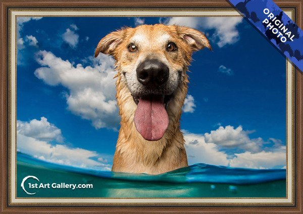 A photo of a happy dog in the sea