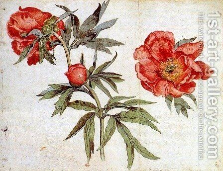 Study of Peonies c. 1472 by Martin Schongauer - Reproduction Oil Painting