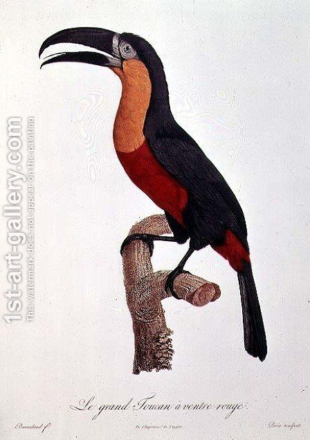 Toucan- Great Red-Bellied by Jacques Barraband by Jacques Barraband - Reproduction Oil Painting