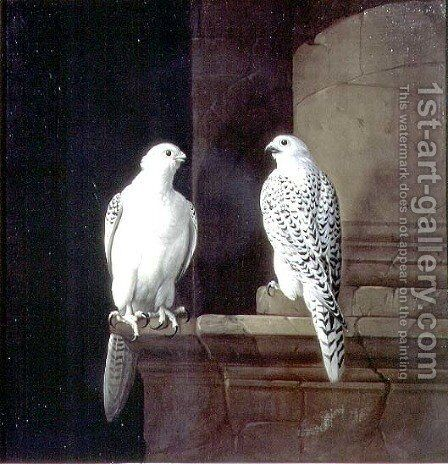 Two Iceland Falcons by Jakab Bogdany - Reproduction Oil Painting