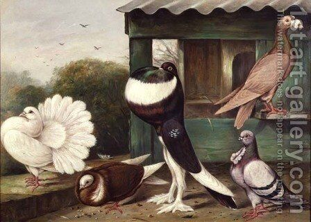 Pouter Pigeons by James E. Bourhill - Reproduction Oil Painting