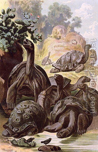 Giant Tortoises from the Galapagos Islands, from a natural history book, 1887 by Alfred Brehm - Reproduction Oil Painting