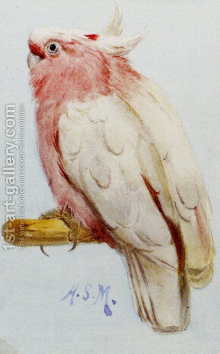 A Pair Of Leadbetter Cockatoos by Henry Stacy Marks - Reproduction Oil Painting