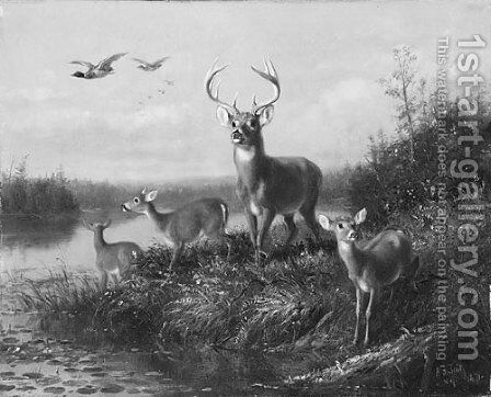 On the Qui Vive, Buck and Three Does by Arthur Fitzwilliam Tait - Reproduction Oil Painting