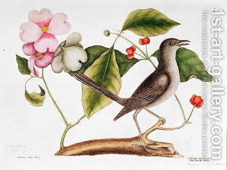 Dogwood: Cornus florida, and Mocking Bird from the 'Natural History of Carolina' by Mark Catesby - Reproduction Oil Painting