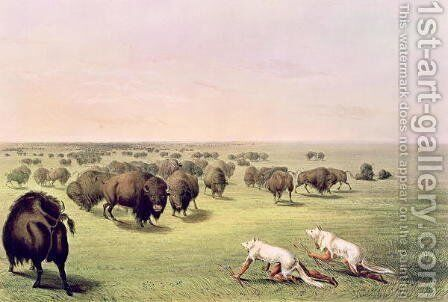 Hunting Buffalo Camouflaged with Wolf Skins, c.1832 by George Catlin - Reproduction Oil Painting