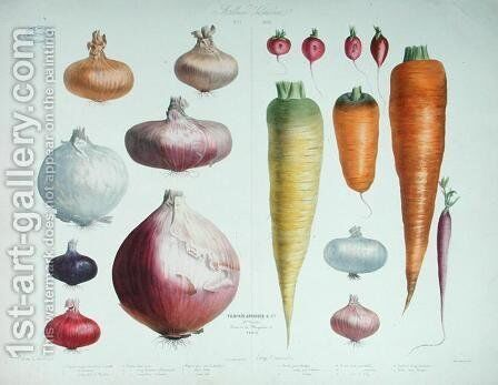 Onions, Radishes and Carrots, from the first 'Album Vilmorin', 1850 by Elisa Champin - Reproduction Oil Painting