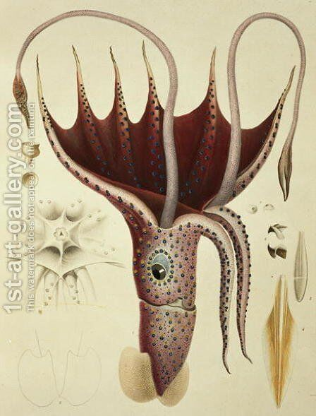 Squid, Pl.2 from 'Histoire Naturelle Generale et Particuliere des Cephalopodes Acetabuliferes', 1835-48 by Antoine Chazal - Reproduction Oil Painting