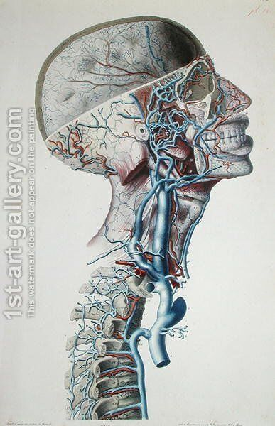 Veins and arteries in the head, plate from 'Recherches Anatomiques, Physiologiques, et Pathologiques sur le System Veineux', 1829 by Antoine Chazal - Reproduction Oil Painting