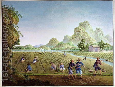 Rice cultivation in China, transplanting plants by Anonymous Artist - Reproduction Oil Painting