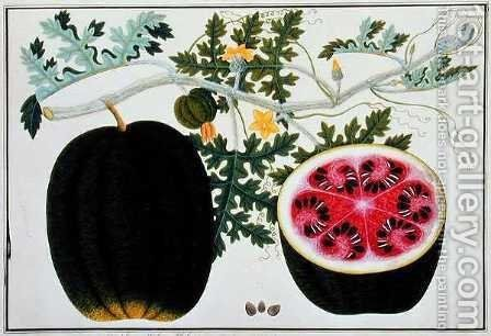 Mindikay or Water Melon, from 'Drawings of Plants from Malacca', c.1805-18 by Anonymous Artist - Reproduction Oil Painting