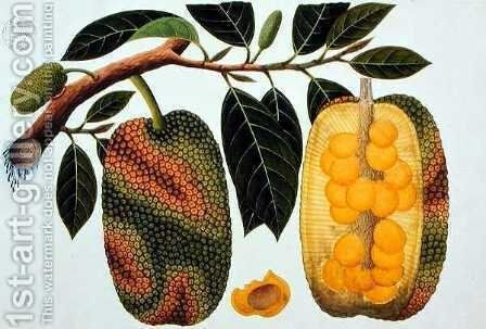 Champedak Artocarpus integrifolia or Longleaved Jack, from 'Drawings of Plants from Malacca', c.1805-18 by Anonymous Artist - Reproduction Oil Painting