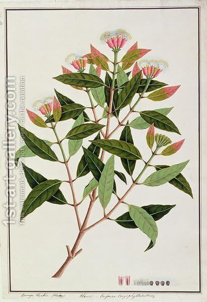 Boongo Chinkie (Malay), Eugenia Caryophyllatallen or Clove, from 'Drawings of Plants from Malacca', c.1805-18 by Anonymous Artist - Reproduction Oil Painting
