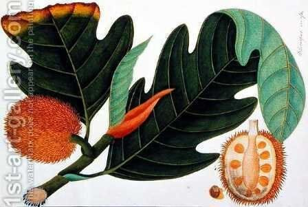 Trab or Artocarpus incesses, from 'Drawings of Plants from Malacca', c.1805-18 by Anonymous Artist - Reproduction Oil Painting