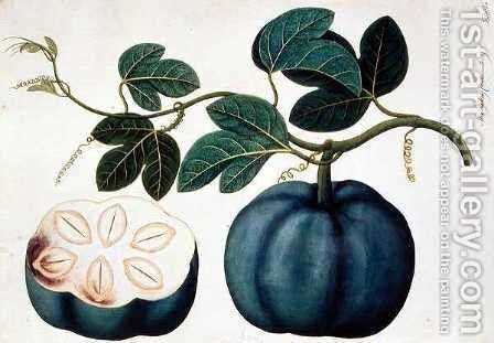 Mendickay or Water Melon, from 'Drawings of Plants from Malacca', c.1805-18 by Anonymous Artist - Reproduction Oil Painting
