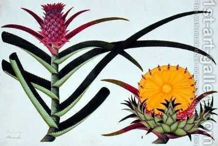 Pineapple or Bromelia, from 'Drawings of Plants from Malacca', c.1805-18 by Anonymous Artist - Reproduction Oil Painting