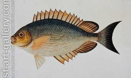 Eekan Kietang Kietang Lawot, from 'Drawings of Fishes from Malacca', c.1805-18 by Anonymous Artist - Reproduction Oil Painting