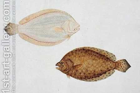 Eekan Liedah Liedah Pindik, from 'Drawings of Fishes from Malacca', c.1805-18 by Anonymous Artist - Reproduction Oil Painting