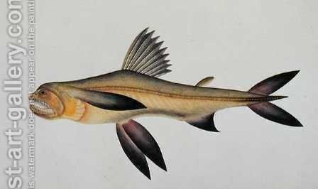 Eekan Arooan Tasick, from 'Drawings of Fishes from Malacca', c.1805-18 by Anonymous Artist - Reproduction Oil Painting