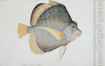 Eekan Dawon Baroo, from 'Drawings of Fishes from Malacca', c.1805-18 by Anonymous Artist - Reproduction Oil Painting