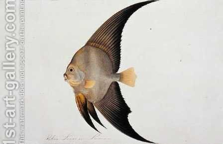 Eekan Leeman Leeman, from 'Drawings of Fishes from Malacca', c.1805-18 by Anonymous Artist - Reproduction Oil Painting