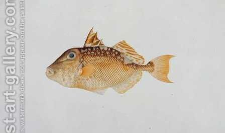 Eekan Jebong, from 'Drawings of Fishes from Malacca', c.1805-18 by Anonymous Artist - Reproduction Oil Painting
