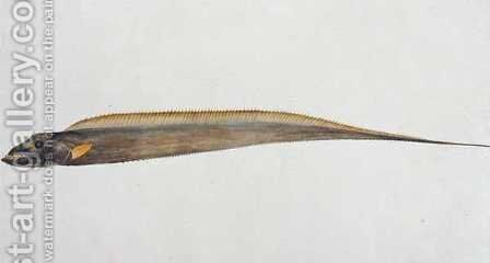 Eekan L-eore La-eore, from 'Drawings of Fishes from Malacca', c.1805-18 by Anonymous Artist - Reproduction Oil Painting