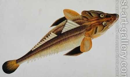 Eekan Bajie Bajie, from 'Drawings of Fishes from Malacca', c.1805-18 by Anonymous Artist - Reproduction Oil Painting