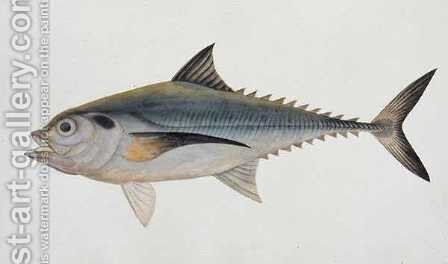 Eekan Tungooroongan, from 'Drawings of Fishes from Malacca', c.1805-18 by Anonymous Artist - Reproduction Oil Painting