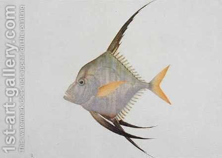 Eekan Madoe Madoe, from 'Drawings of Fishes from Malacca', c.1805-18 by Anonymous Artist - Reproduction Oil Painting