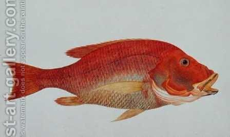 Eekan Bambangan, from 'Drawings of Fishes from Malacca', c.1805-18 by Anonymous Artist - Reproduction Oil Painting