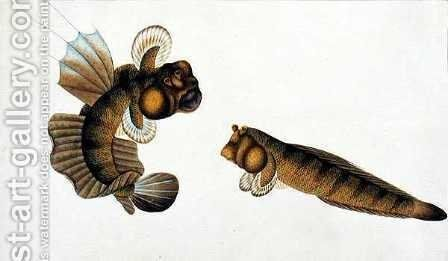 Mud Fish, Tumba Koli, from 'Drawings of Fishes from Malacca', c.1805-18 by Anonymous Artist - Reproduction Oil Painting