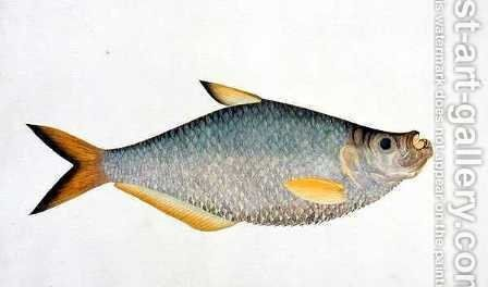 Eekan Poopote, from 'Drawings of Fishes from Malacca', c.1805-18 by Anonymous Artist - Reproduction Oil Painting