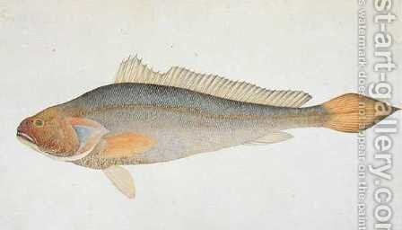 Eekan Slampay, from 'Drawings of Fishes from Malacca', c.1805-18 by Anonymous Artist - Reproduction Oil Painting