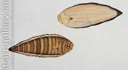 Tung Fish, Eekan Liedah Liedah, from 'Drawings of Fishes from Malacca', c.1805-18 by Anonymous Artist - Reproduction Oil Painting