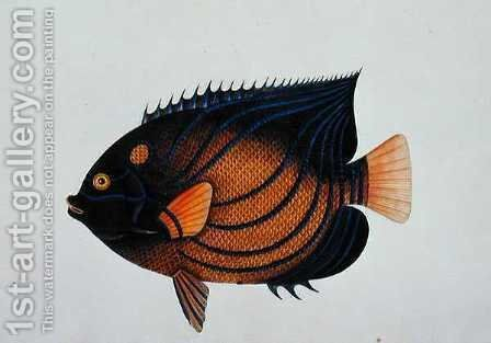 Exotic Fish, from 'Drawings of Fishes from Malacca', c.1805-18 by Anonymous Artist - Reproduction Oil Painting