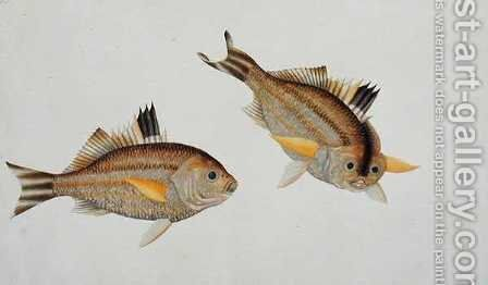 Eekan King-kerong, from 'Drawings of Fishes from Malacca', c.1805-18 by Anonymous Artist - Reproduction Oil Painting