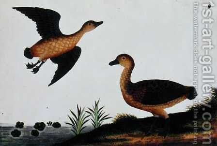 Beliebus, from 'Drawings of Birds from Malacca', c.1805-18 by Anonymous Artist - Reproduction Oil Painting