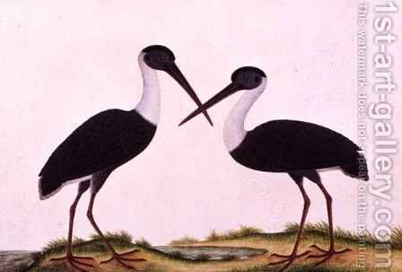 Bangou Eatan, from 'Drawings of Birds from Malacca', c.1805-18 by Anonymous Artist - Reproduction Oil Painting