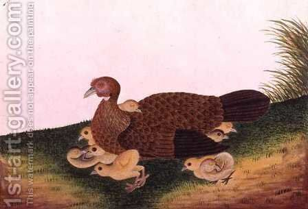 Jangle Hen with her chickens, from 'Drawings of Birds from Malacca', c.1805-18 by Anonymous Artist - Reproduction Oil Painting