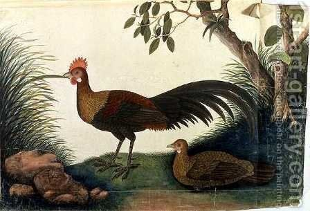Poultry, from 'Drawings of Birds from Malacca', c.1805-18 by Anonymous Artist - Reproduction Oil Painting