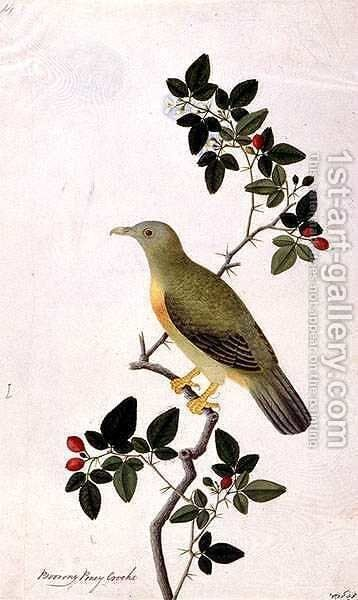 Boorang Poney Crocho, from 'Drawings of Birds from Malacca', c.1805-18 by Anonymous Artist - Reproduction Oil Painting