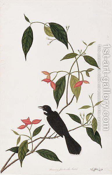 Booring Janke-chee Gutah, from 'Drawings of Birds from Malacca', c.1805-18 by Anonymous Artist - Reproduction Oil Painting