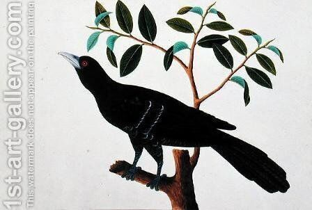 Black Bird, from 'Drawings of Birds from Malacca', c.1805-18 (1) by Anonymous Artist - Reproduction Oil Painting