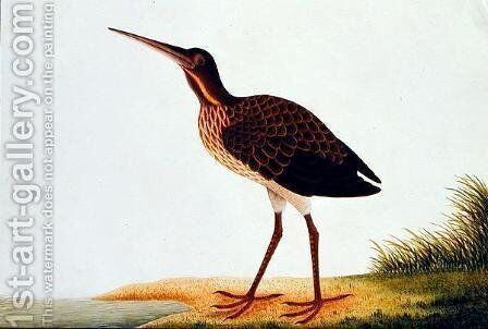 Sea bird, from 'Drawings of Birds from Malacca', c.1805-18 by Anonymous Artist - Reproduction Oil Painting
