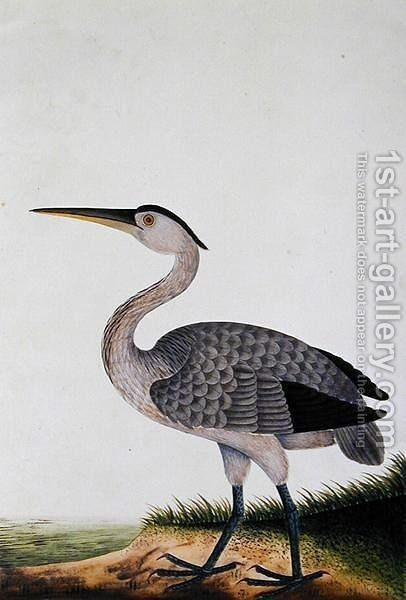 Boorang Rangong, from 'Drawings of Birds from Malacca', c.1805-18 by Anonymous Artist - Reproduction Oil Painting