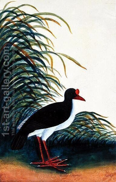 Boorong Tetioot, from 'Drawings of Birds from Malacca', c.1805-18 by Anonymous Artist - Reproduction Oil Painting