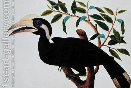 Ke-ke, from 'Drawings of Birds from Malacca', c.1805-18 (2) by Anonymous Artist - Reproduction Oil Painting