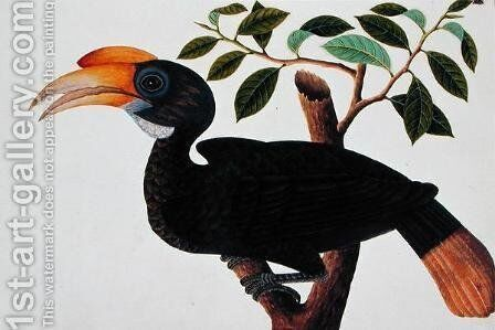 Ke-ke, from 'Drawings of Birds from Malacca', c.1805-18  (3) by Anonymous Artist - Reproduction Oil Painting